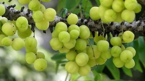 Esta fruta es tan antioxidante que puede ayudar a reducir el crecimiento de c