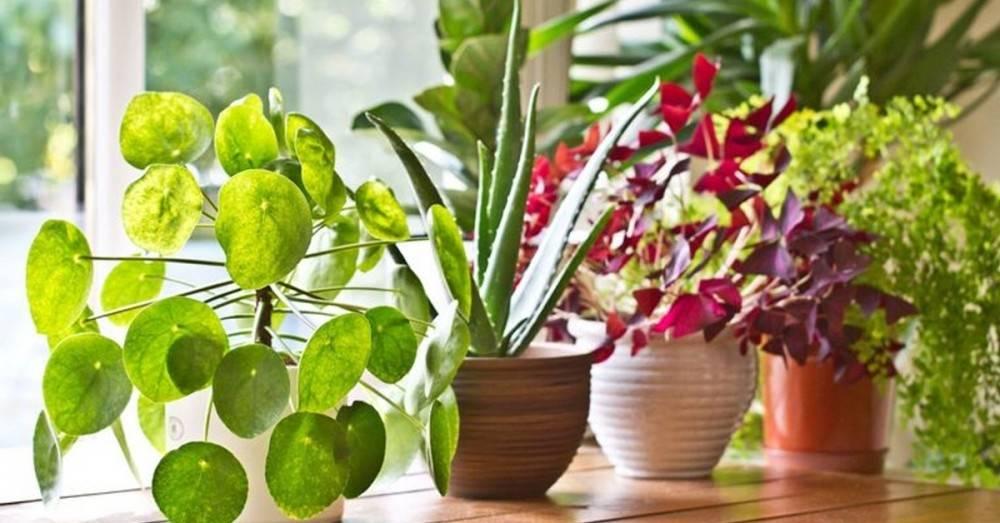 Plantas para armonizar el hogar y atraer el amor en tu vida