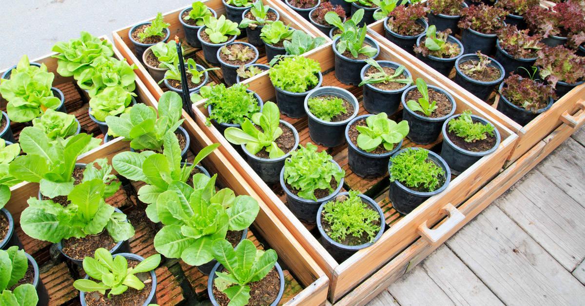 Cómo aprovechar la combinación de plantas en la huerta