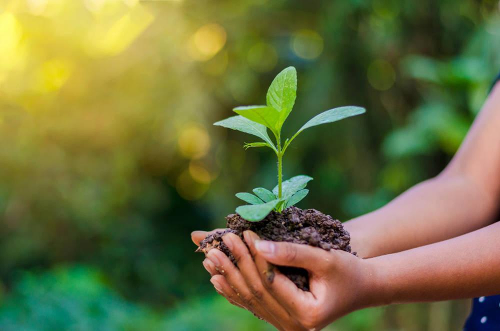Desarrollo sustentable: en qué consiste, tipos y ejemplos