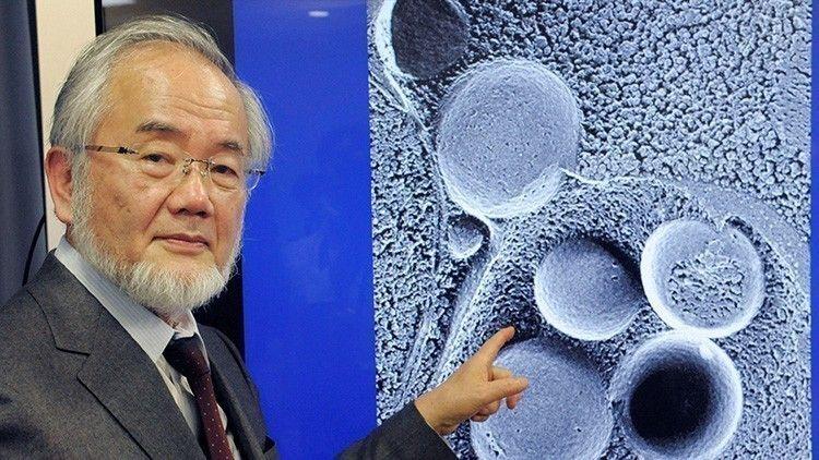 Yoshinori Ohsumi, recibió el Nobel de Medicina en 2016 por sus trabajos relacionados a este proceso