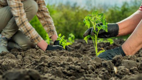 ¿Podemos mejorar el planeta desde la alimentación?