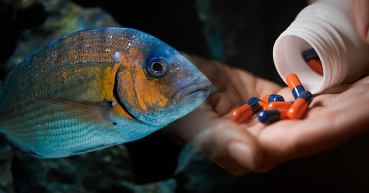 peces-efectos-secundarios-antidepresivos-antibioticos