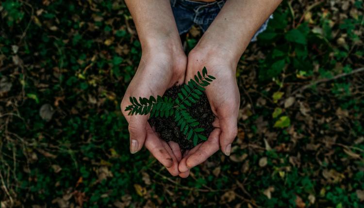 %name 11 hábitos sustentables que puedes incorporar de manera inmediata en tu vida cotidiana