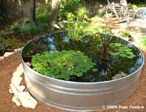 Cómo hacer un estanque acuático con plantas y peces
