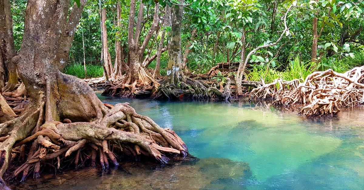 Qué son los manglares y por qué es tan importante protegerlos