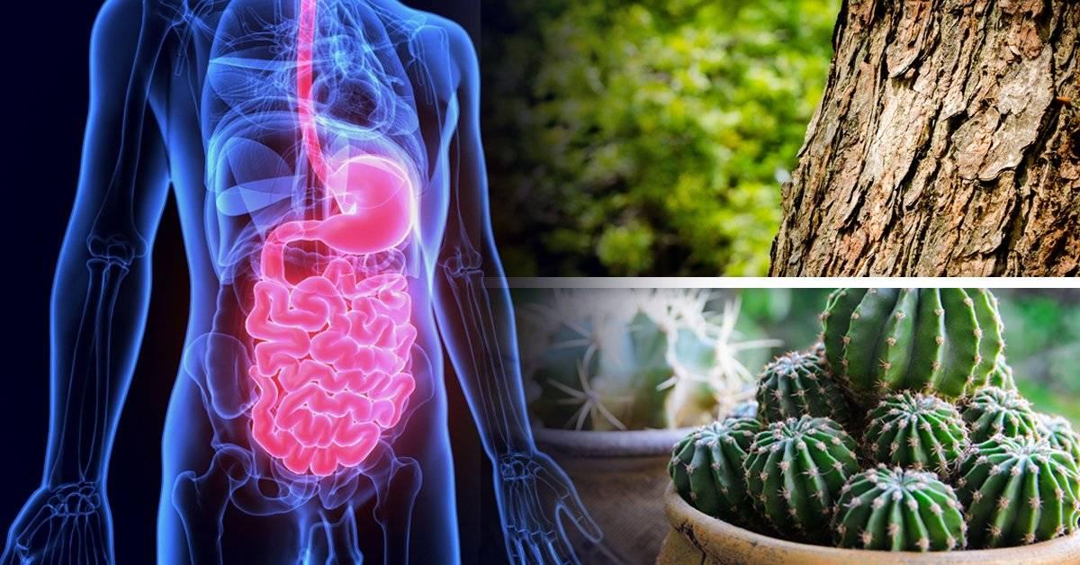 6 cosas que no sabías que te podías comer y le hacen bien a tu organismo