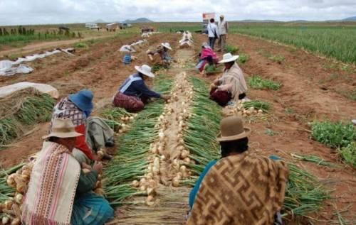 Bolivia ya produce por sí misma casi el 100% de los alimentos que consume