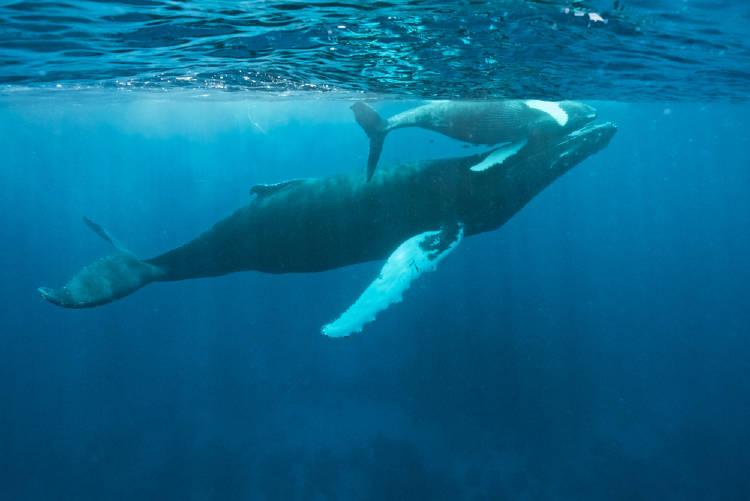 ballenas republica dominicana