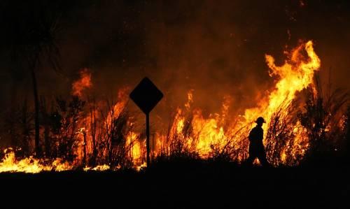 Tras meses de incendios en Australia, se quemaron más de 3 millones de hectáreas