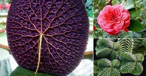22 asombrosas especies vegetales geométricas