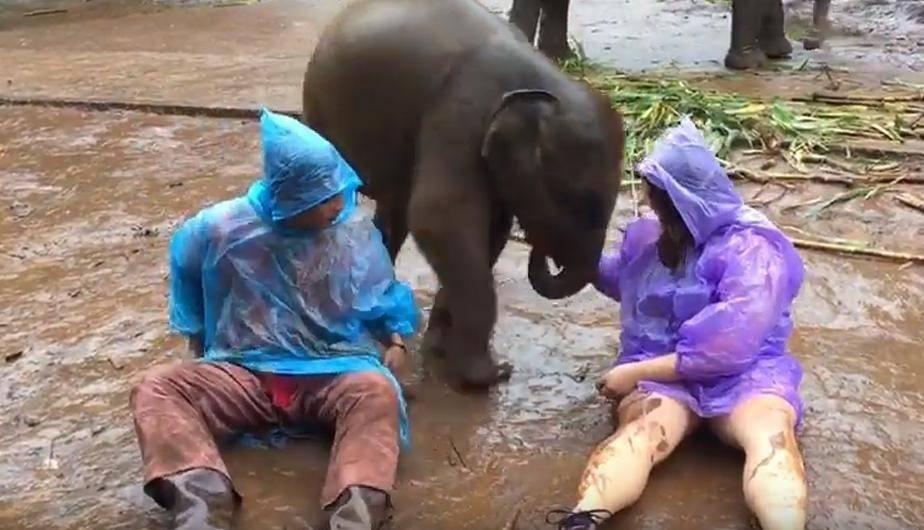 Éste es el video viral del elefante bebé que está matando de amor a todos