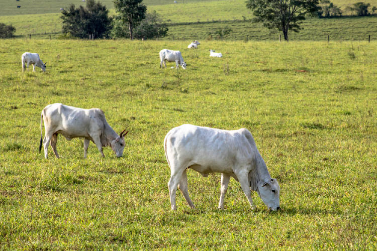 suelo ganado pastoreo
