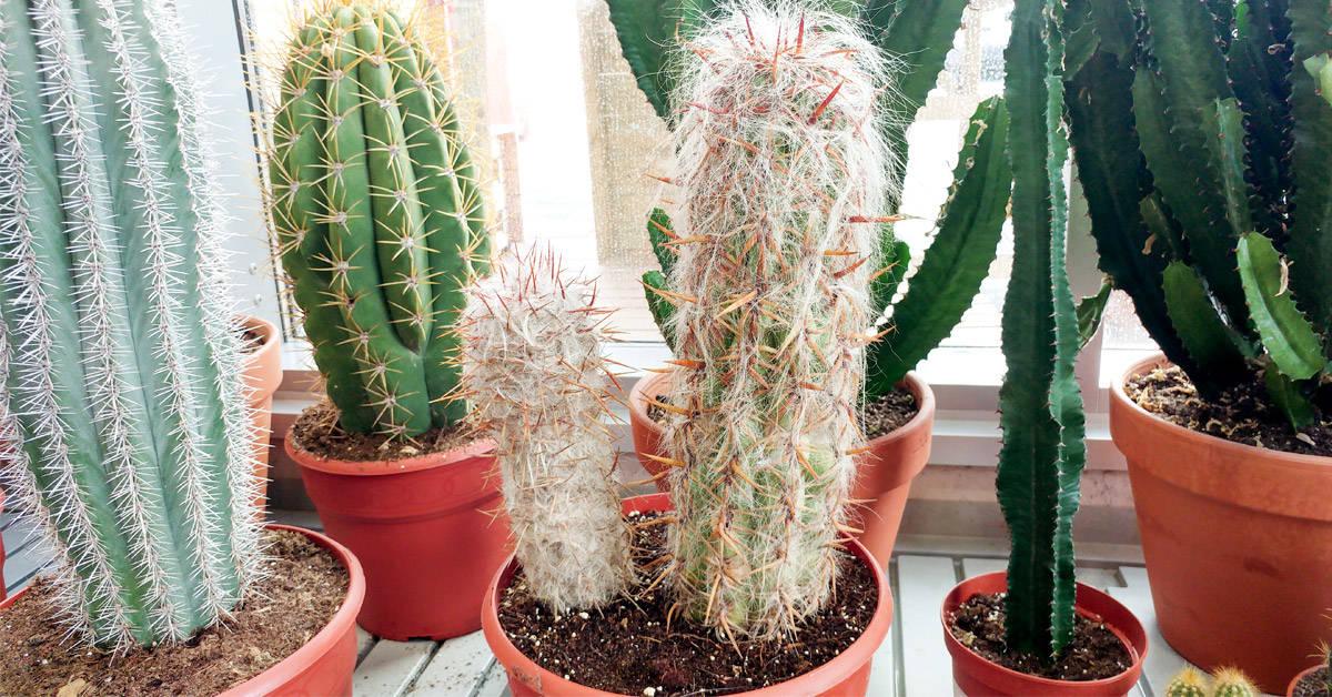 Dónde ubicar los cactus en la casa para evitar que atraigan energías negativas