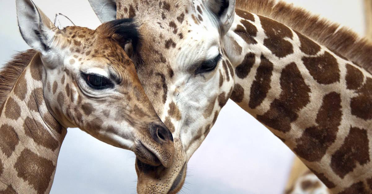 Más de 28.000 especies están amenazadas a nivel mundial, según un nuevo informe