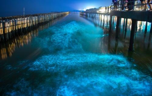Esta playa en Holbox te invita a disfrutar del fenómeno de la bioluminiscencia