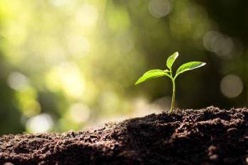 regeneración del suelo