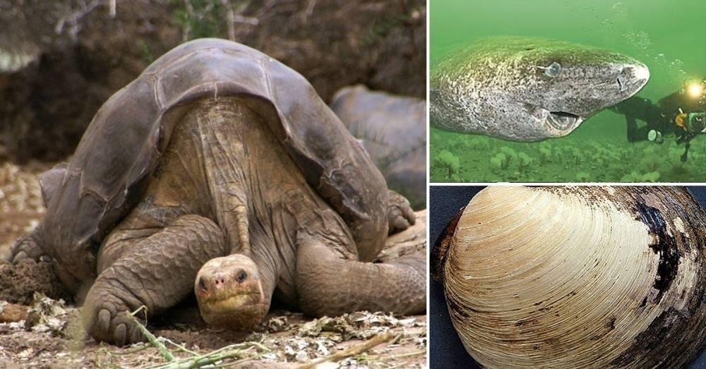 Las curiosas historias de los 5 animales más viejos del mundo