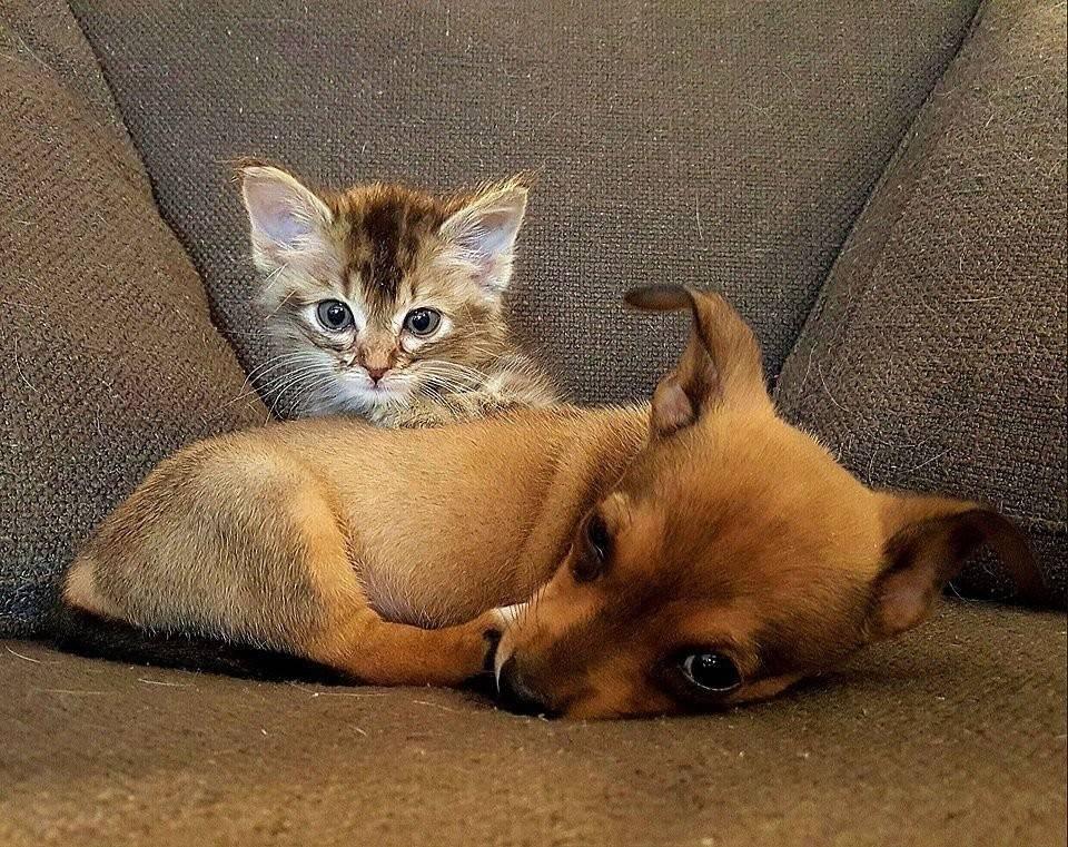 Chip y Adele: dos cachorros abandonados que se volvieron inseparables