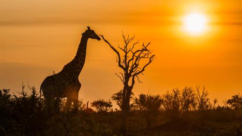 De safari por Sudáfrica: 9 fascinantes reservas naturales que debes conocer