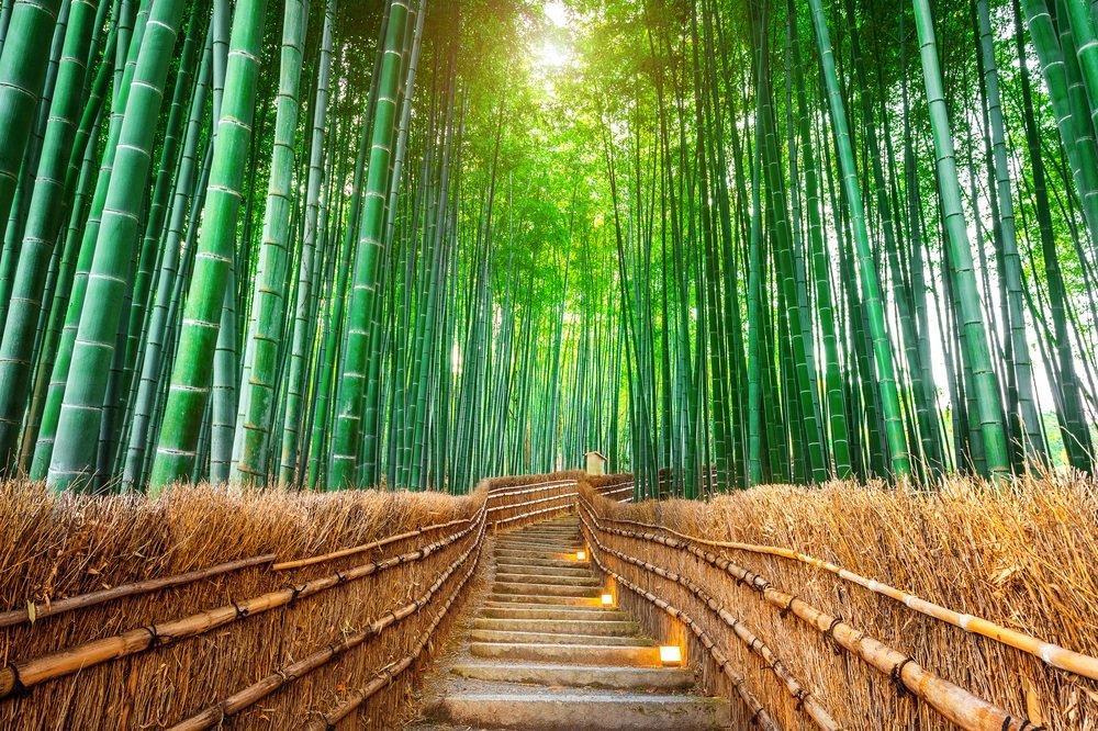 ¿Por qué el bambú es un gran aliado para combatir el cambio climático?