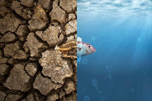 6DNow: sé parte de la cadena mundial de acciones climáticas más grande