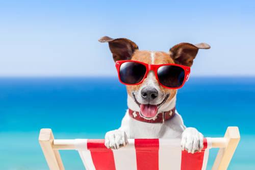 6 trucos para mantener a tu mascota sana en verano