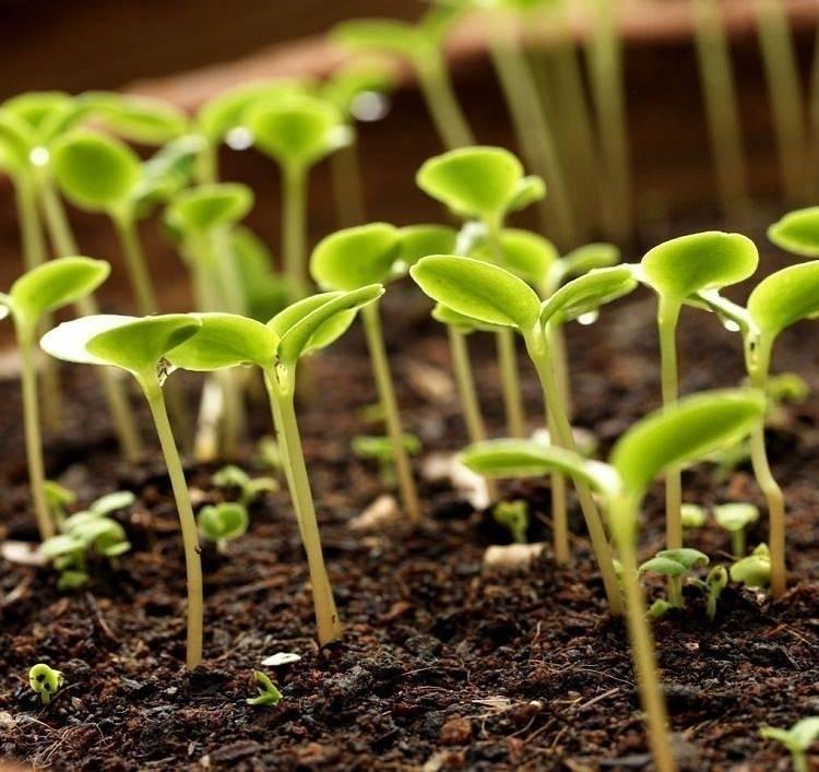 5 usos del agua oxigenada en el jardín