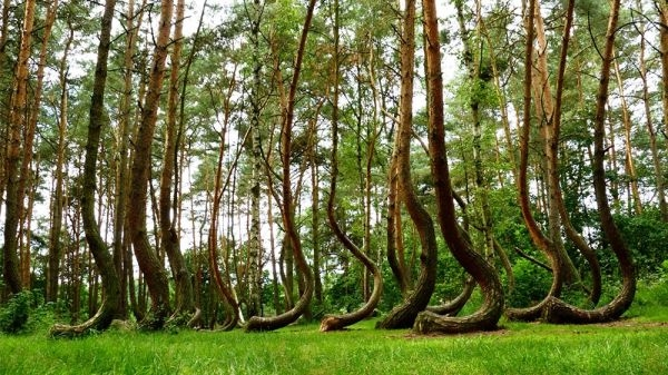 Nature-Crooked-Forest