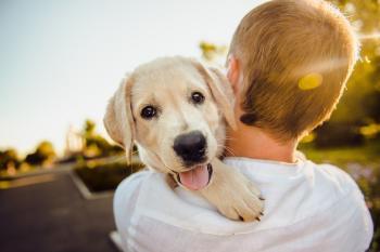 Lo que tu perro quiere decir cuando te pone la pata encima