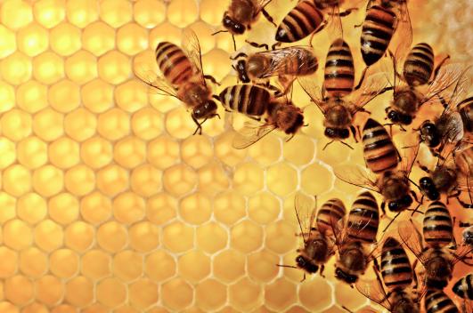 7 cosas que sucederán de inmediato cuando comiences a comer miel a diario