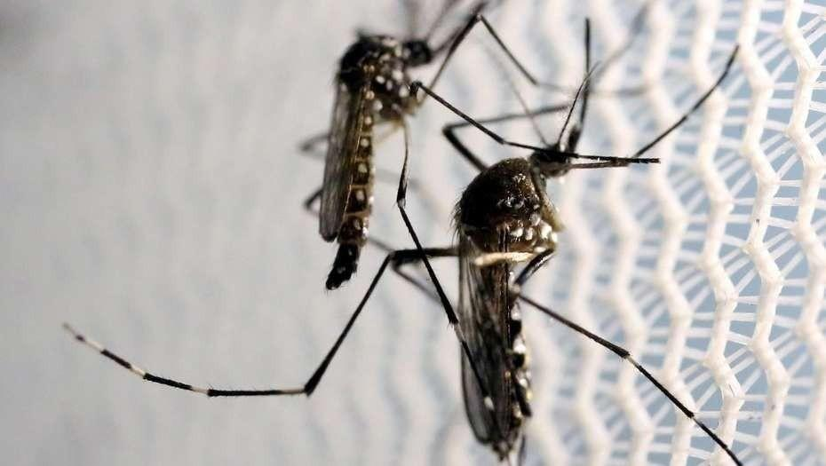 La saliva de mosquito es una mezcla muy compleja de más de 100 proteínas