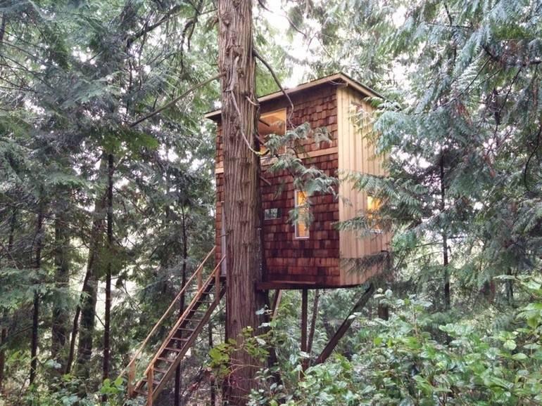 Este joven construyó su pequeña casa en un árbol, ¡y los beneficios son as..