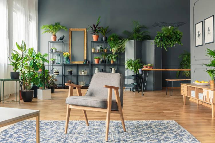 plantas en el hogar con una silla en primer plano