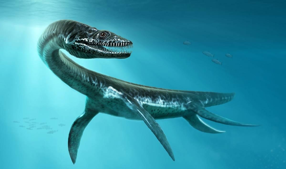 Encuentran en Perú el fósil de un Plesiosaurio marino