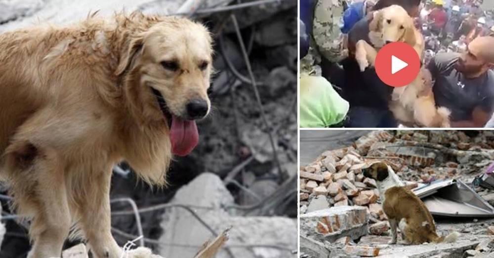 Ellos también cuentan: qué pasó con los animales durante el terremoto en M