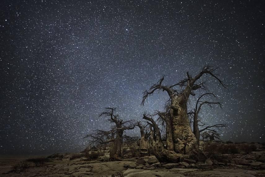 15 magníficas fotografías de antiguos árboles en la noche