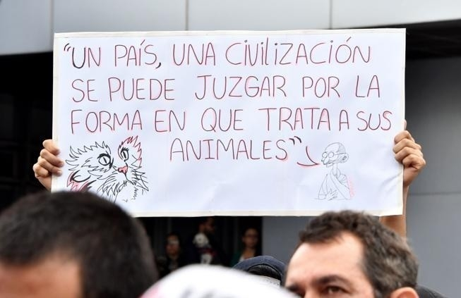 Cartel marcha por los animales en Costa Rica