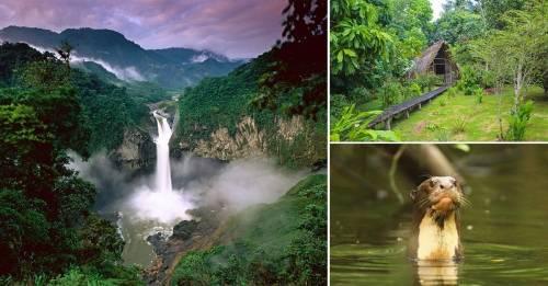 Parque Nacional Yasuní: conoce uno de los tesoros más alucinantes de Ecuador