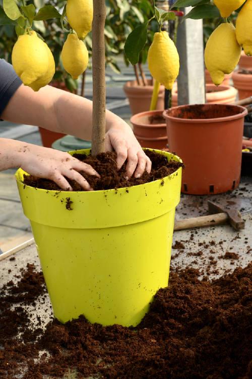Claves para plantar frutales