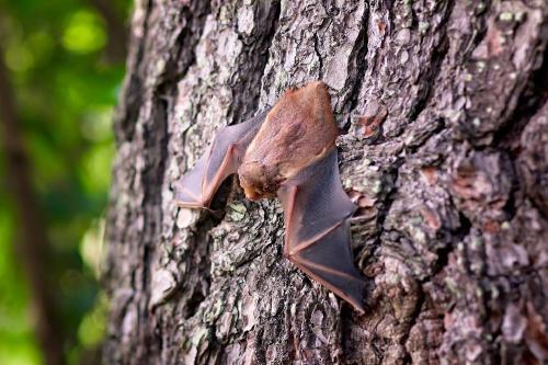 Científicos hallaron en murciélagos del Reino Unido un virus relacionado con el COVID-19