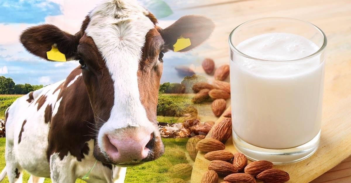 Caen las ventas de leche ante el crecimiento de alternativas vegetales