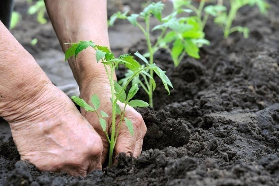 Truco para hacer que las raíces de tus plantas se vuelvan más fuertes, ¡con..