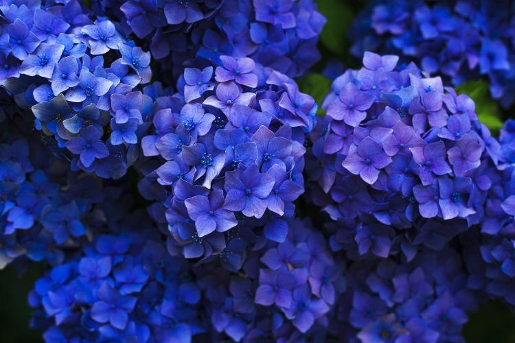 bloom-1851481_1920