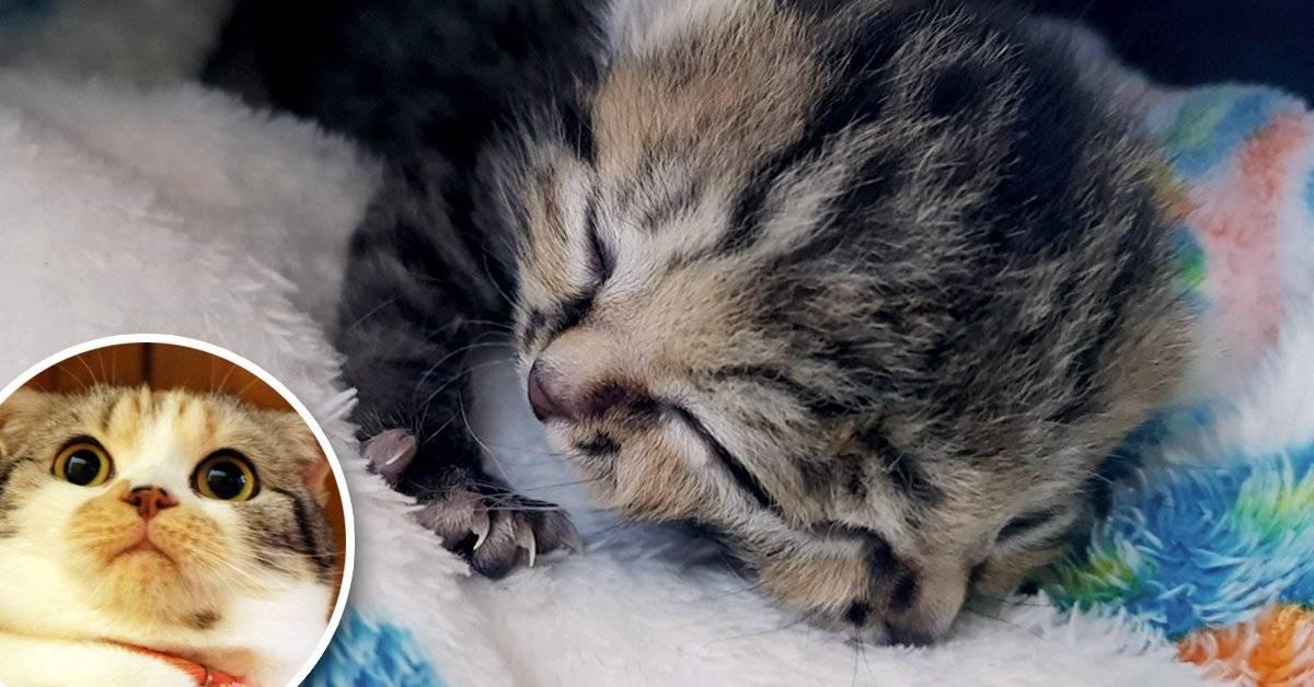 Esta pequeña gatita tiene dos caras y te dejará helado... ¡de amor!