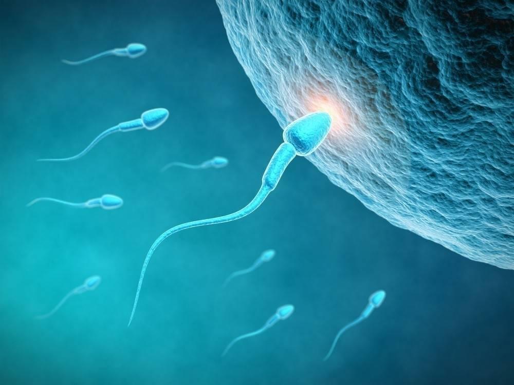 ¿Sabías que los óvulos seleccionan a los espermatozoides y no al revés?