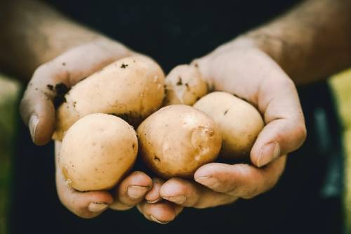 700 toneladas de patatas han sido desechadas durante la pandemia