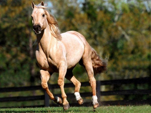 animalshorses0007691