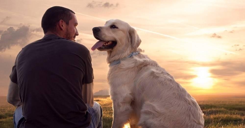 ¿Cómo podemos afrontar el duelo tras la muerte de una mascota?