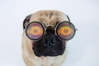 perro anteojos